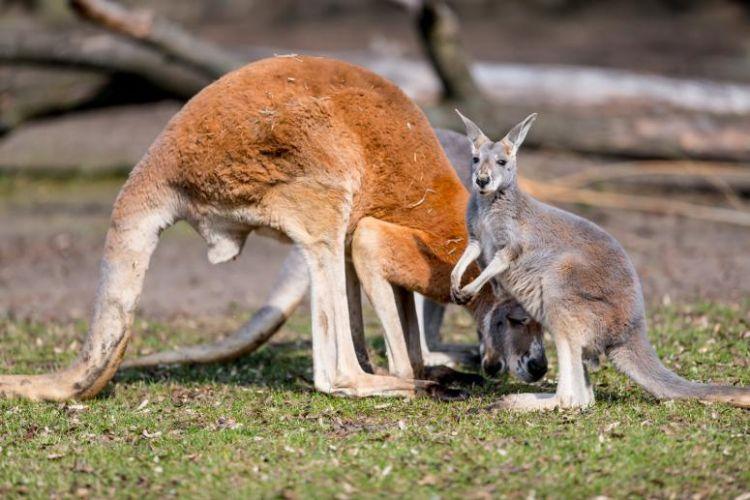 co się dzieje w Australii Umawiam się w jednym kierunku 2