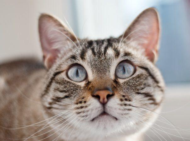 Kot Synoptyk ma kochający dom. To prawdziwy szczęściarz.