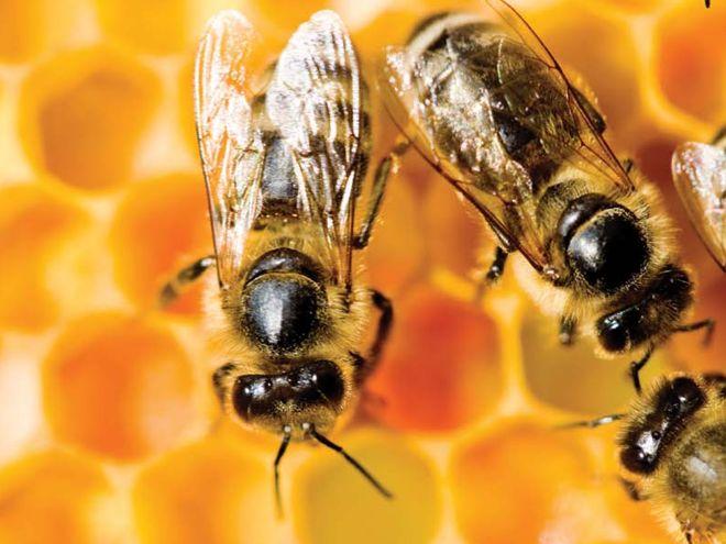 Pszczoła jest świetny zapylaczem