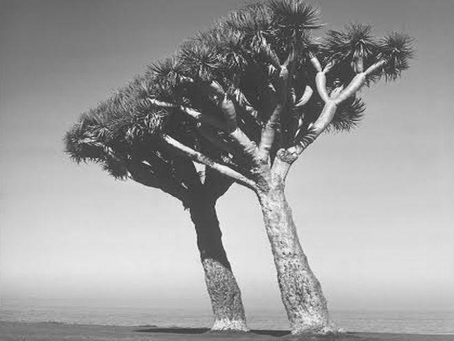 Z cyklu Drzewa