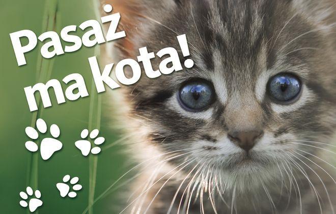 Jedną z atrakcji będzie wystawa kotów rasowych
