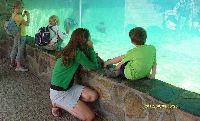 Dzięki specjalnym filtrom woda jest idealnie przejrzysta, co pozwala dobrze przyjrzeć się zwierzętom