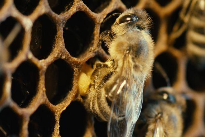 Pszczoły są niezwykle pożyteczne