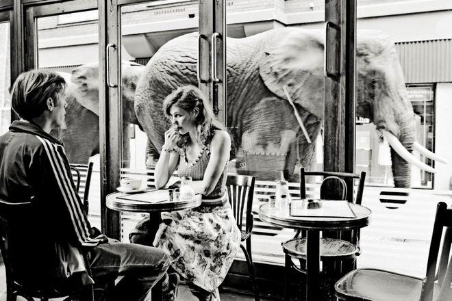 Zakochani widzą słonie