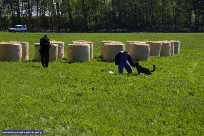 Psy pozytywnie zaliczyły ćwiczenia sprawdzające