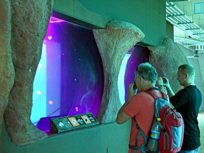 Zwiedzający mogą podziwiać nowe gatunki