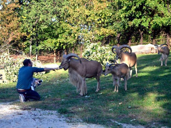 Bliskie spotkania ze zwierzętami
