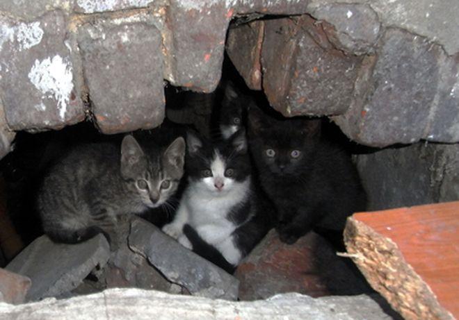 Celem projektu jest oszacowanie liczby kotów na Starym Mieście