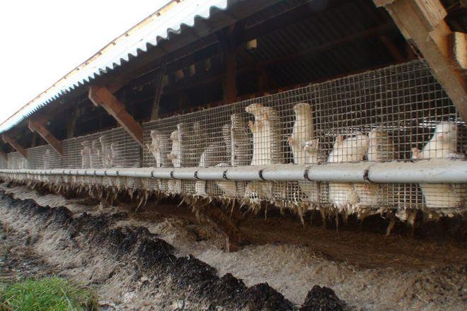 Jedna z ferm futrzarskich