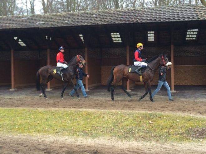 Konie trenowane we Wrocławiu odnoszą sukcesy w Niemczech