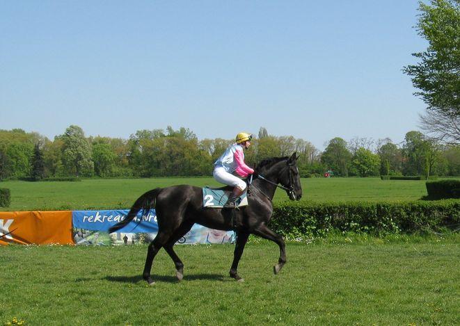 Wrocławscy sympatycy wyścigów konnych pojawiają sie licznie na torze Partynice przy okazji zawodów w ujeżdżeniu jak i wyścigów.
