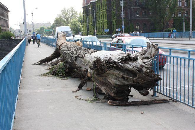 Most Pokoju we Wrocławiu. Na zdjęciu konar zagrażający konstrukcji wyłowiony w czasie powodzi w 2010 roku