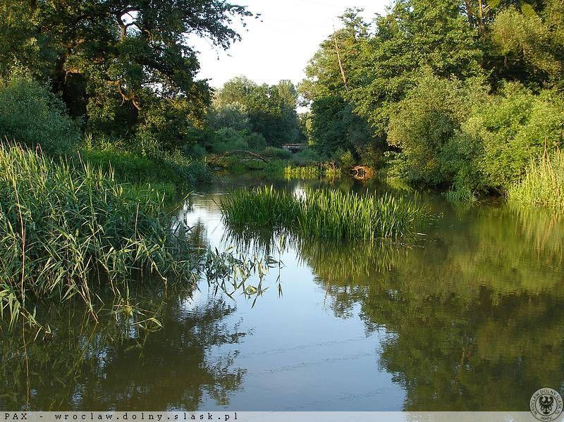 Leśny charakter krajobrazu Parku Wschodniego