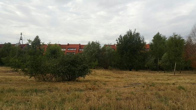 W tym miejscu może powstać Park Wojszyce. Projekt wspierają deweloperzy
