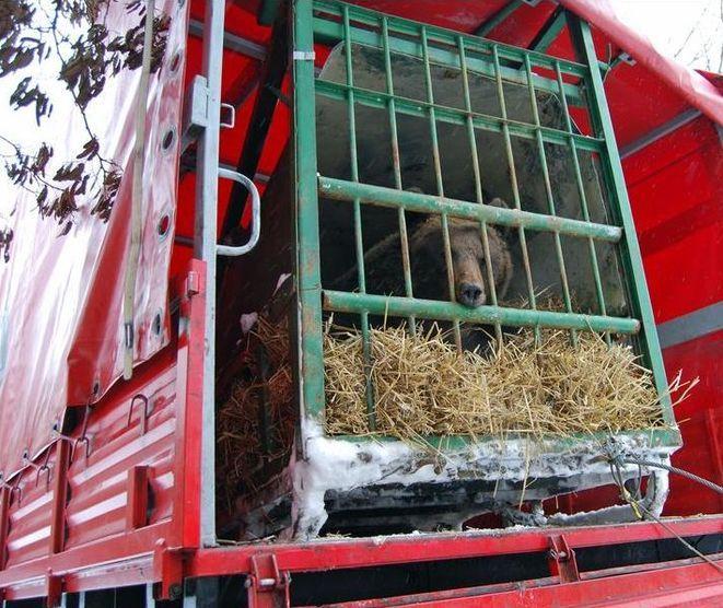 Zwierzę do wrocławskiego zoo dotarło wozem strażackim.