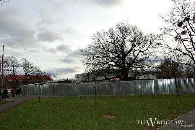 Wrocławianie mają dość masowej wycinki drzew we Wrocławiu