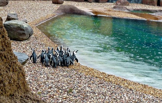 Zwierzęta czekają na wrocławian