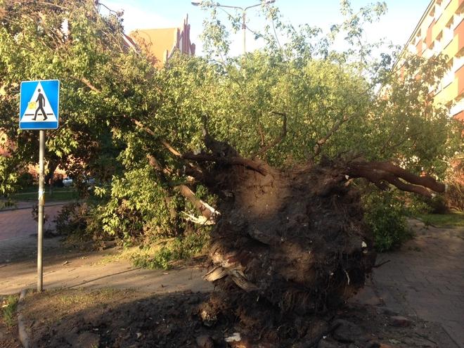Niedzielna burza spowodowała we Wrocławiu poważne szkody