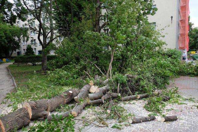 Połamane drzewa są stopniowo usuwane z ulic i chodników