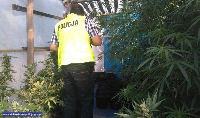 Policja w całym regionie walczy z narkotykami