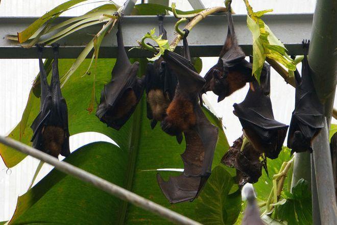 Zwierzęta zamieszkały w pawilonie Madagaskaru