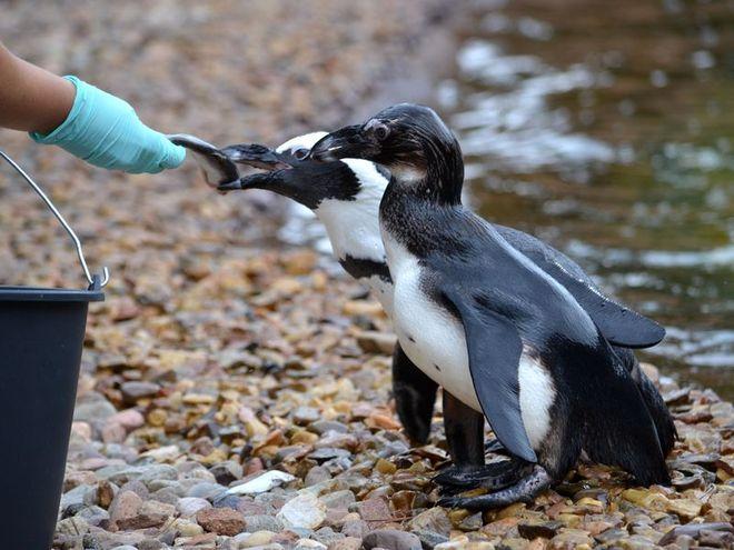 Uczniowie mogą zdobywać wiedzę w kontakcie ze zwierzętami