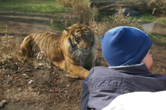 Po ogrodzie zoologicznym oprowadzi sam prezes ZOO