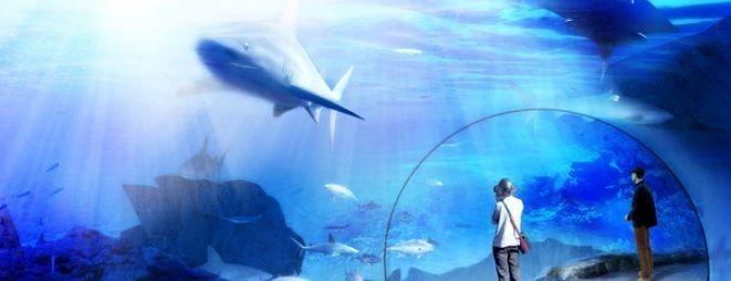 W taki sposób będziemy mogli podziwiać m.in. rekiny
